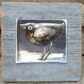 Ptaszek grubszy